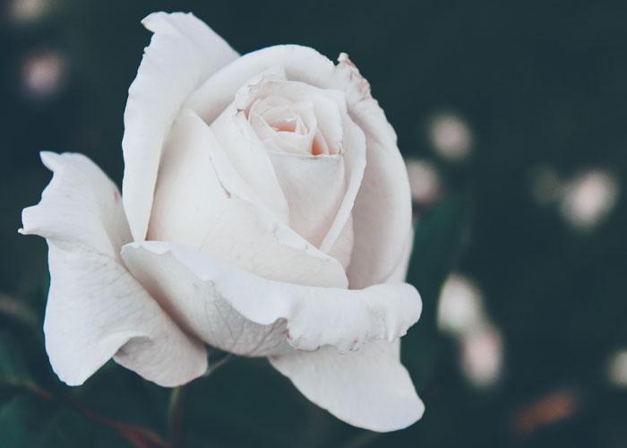 Flowers By Season Wild Roses Blooms